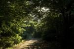 Beech forest 02.tif