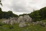 Forest landscape 03.tif