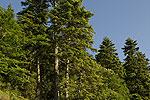 Forest landscape 04.tif