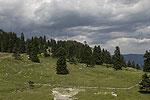 Forest landscape 07.tif
