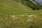 Cupressaceae (Κυπαρισσίδες)