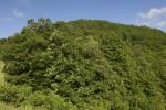 Δάσος φυλλοβόλων πλατυφύλλων